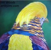Golden pheasant IW