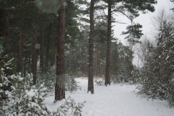 Woods in snow