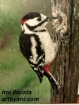 woodpecker ARTbyIMI