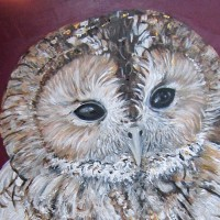 How to paint a Tawny... Owl by yourself!
