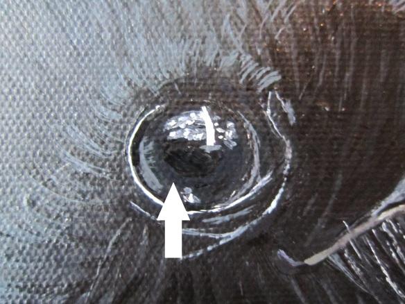 iris eye