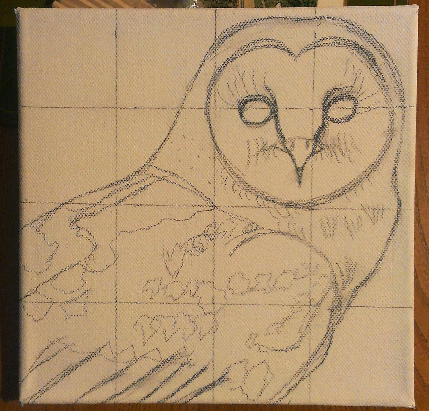 barn owl animal art by imi