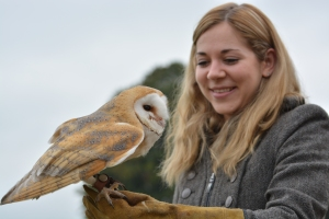 How to paint a barn owl